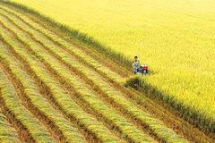 Nông nghiệp ASEAN đứng trước nhiều thách thức lớn