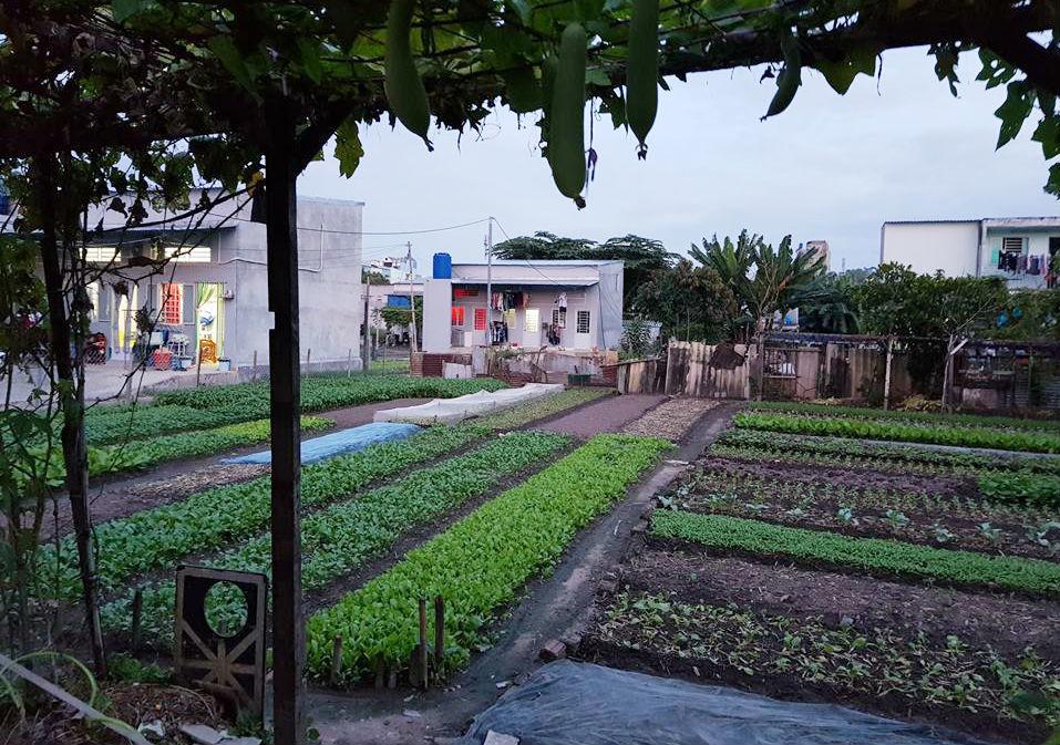 vườn rau Lộc Hưng,thu hồi đất