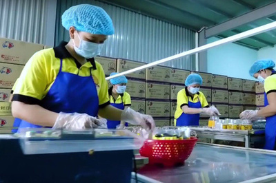 Chinese looking to buy Vietnam's export businesses