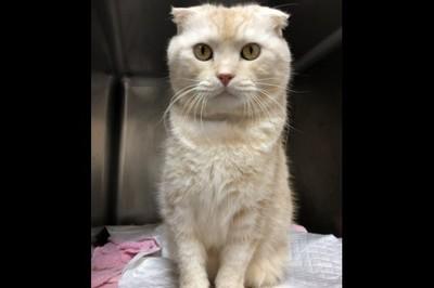 Chuyển phát nhanh 1 con mèo: Người đàn ông bị phạt 46 triệu đồng