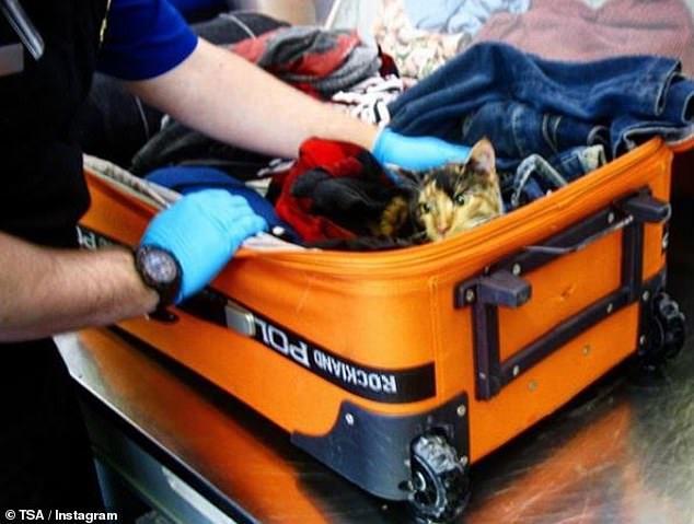 Những món đồ 'kì dị' nhất hành khách mang lên máy bay
