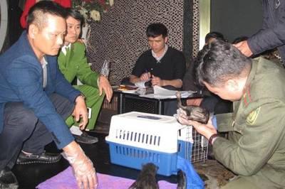 Bắt cô gái trẻ trùm đường dây buôn bán động vật quý hiếm