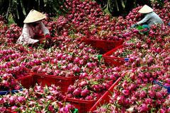 Một thay đổi lớn từ Trung Quốc: Lời cảnh báo gửi tới Việt Nam