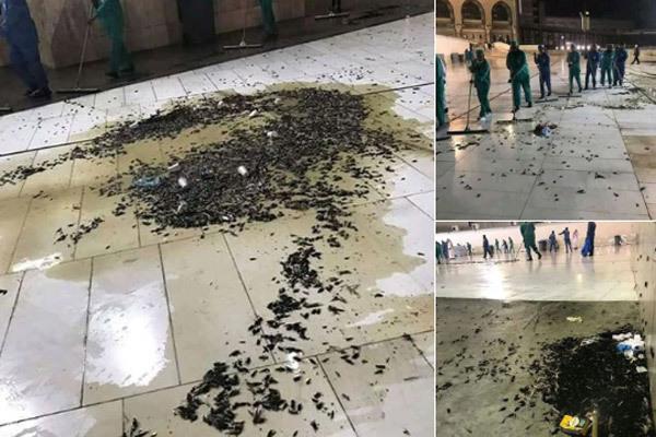 Đàn châu chấu khổng lồ 'tấn công' Thánh địa Mecca