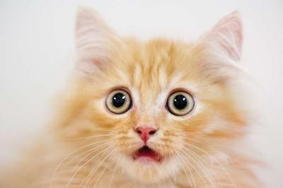 Mèo sang chảnh được chủ cho ở riêng trong căn nhà thuê 35 triệu đồng/tháng