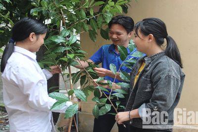 Bí ẩn loài chè cổ thụ ở rừng nguyên sinh Tây Yên Tử