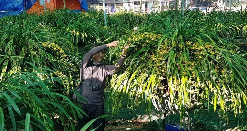 Khu vườn 'huyền thoại' ở Lào Cai, mỗi năm chỉ thu 1 lần 20 tỷ
