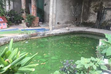Bên trong biệt thự bỏ hoang Sài Gòn: Thả cá hồ bơi, nuôi gà, trồng mít