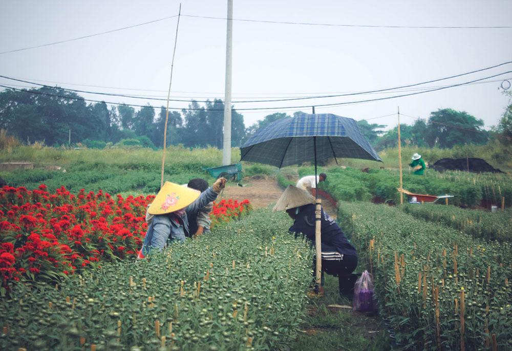 Không khí náo nức ở làng hoa ven Sài Gòn dịp cận Tết