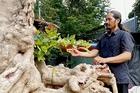 'Cụ' cây rùa cổ tuổi hơn 10 đời người hiếm có khó tìm ở An Giang