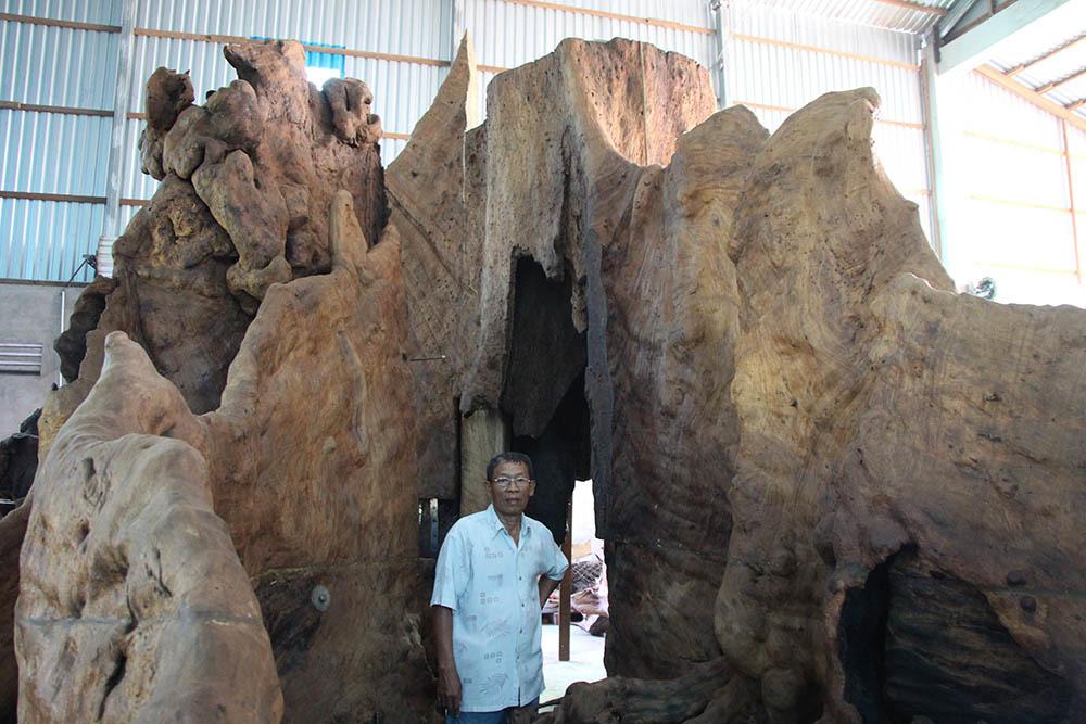 Gốc cây to như hang động và có nhiều hình thù khác nhau, phía trên có hình giống như một bé trai đứng quay mặt vào trong
