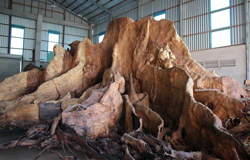 Tiết lộ của ông chủ gốc cây báu vật 35 tỉ đồng ở miền Tây