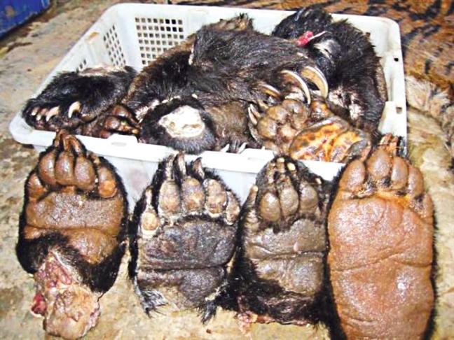 Thực khách choáng nặng món thịt hổ trong thực đơn nhà hàng