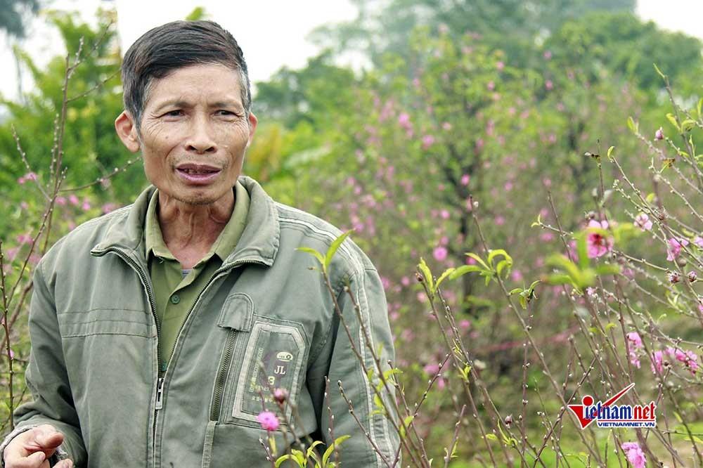 phá hoại tài sản,Bắc Ninh,hoa đào
