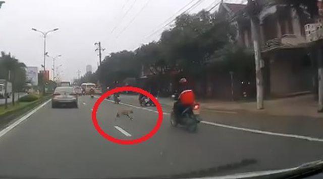 Chó thả rông khiến thanh niên đi xe máy ngã đập đầu xuống đường