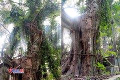Số phận cây sưa trăm tỷ ở Hà Nội: Quyết định bất ngờ ngay trước Tết