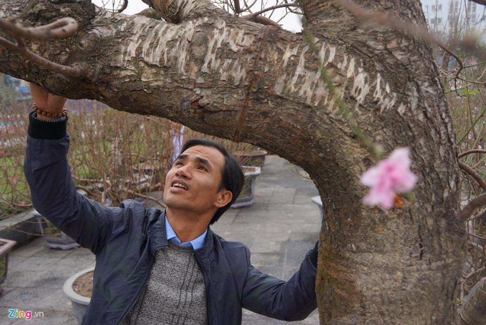 Gốc đào cổ thụ được 'hét' giá 100 triệu ở chợ hoa Tết