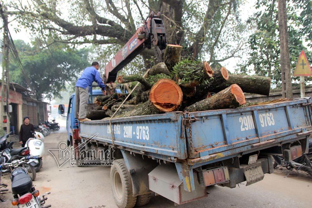 Container gỗ sưa trăm tỷ giữa làng, hàng chục người ngày đêm canh giữ