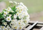 Chọn hoa theo mệnh gia chủ, bí quyết ít người biết
