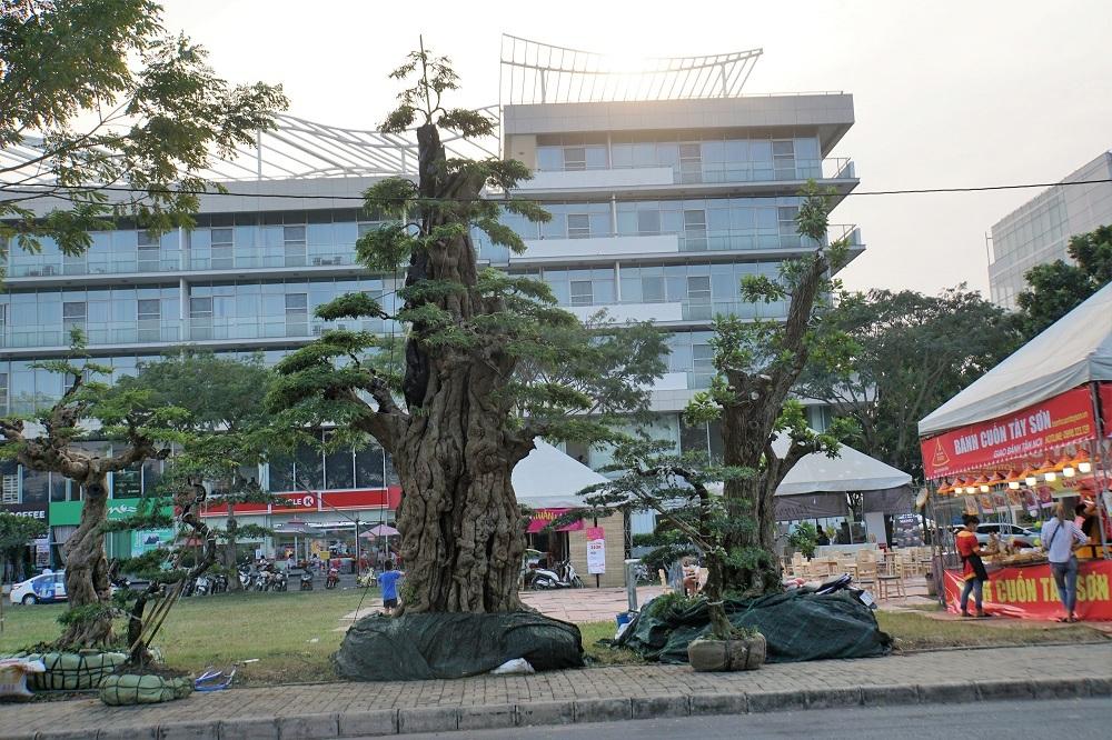 Tết Kỷ Hợi 2019,Tết Nguyên Đán,Hội Hoa Xuân,Sài Gòn