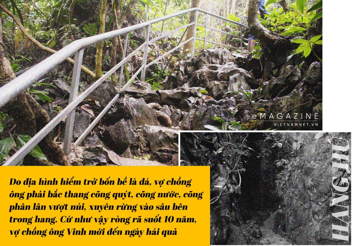 vườn quýt trong hang đá,trồng quýt,quýt Bắc Sơn,vườn quýt,vợ chồng A Phủ,du lịch sinh thái