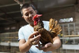 Xếp hàng' cả tháng mua gà may mắn giá gần chục triệu làm quà biếu tết