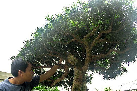 cây cảnh