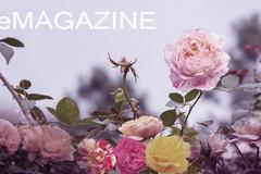 Vương quốc hoa hồng 50 vạn gốc, tiêu tốn 500 tỷ của đại gia Việt
