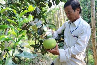 Độc chiêu 'lên đời' trái cây: Lão nông chơi hàng độc dị thu tiền tỷ