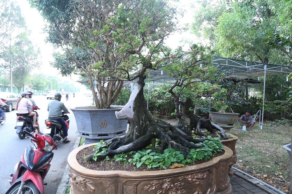 Tết Kỷ Hợi 2019,Sài Gòn,hội hoa xuân,Tết nguyên đán