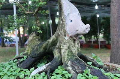 Mê mẩn cây khế hình linh vật heo, 'hét giá' 500 triệu
