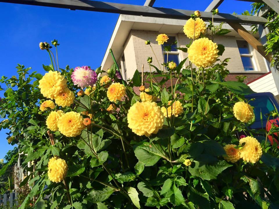Ngắm khuvườn rực rỡ sắc hoa của mẹ Việt ở Hà Lan