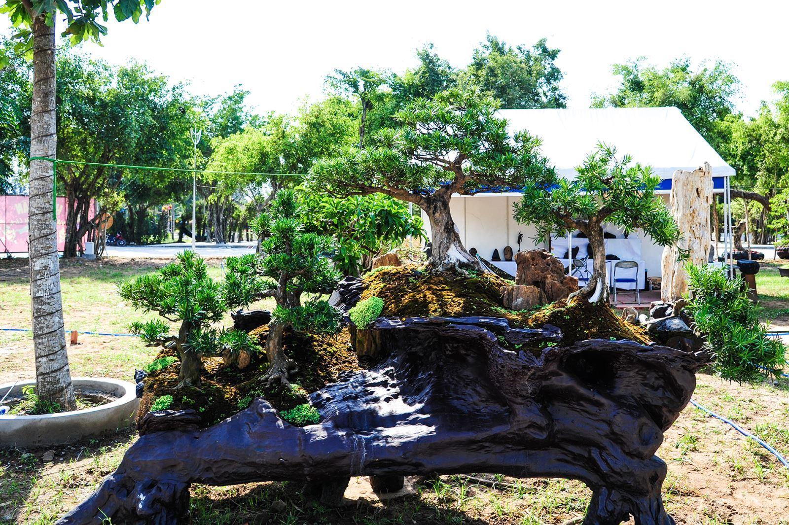 Cay Bonsai Co Gia Gần 5 Tỷ đồng Tại Long An Vietnamnet