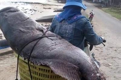 Con cá mú 'có 1 không 2': Của hiếm trời ban