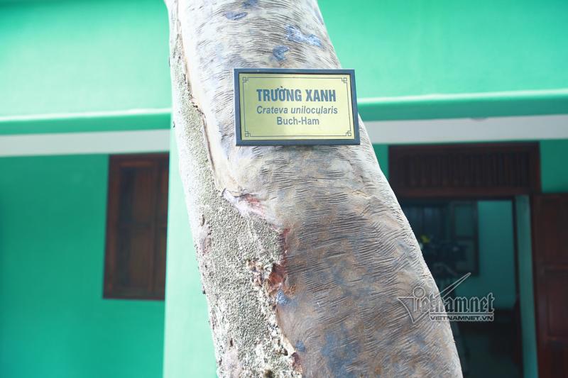 Duyên thiện lành của 'phù thủy' cứu cây trường xanh ở khu di tích Phủ Chủ tịch