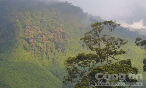 Sự thật về 'rượu tiên' ẩn giấu nơi ngọn cây giữa rừng già