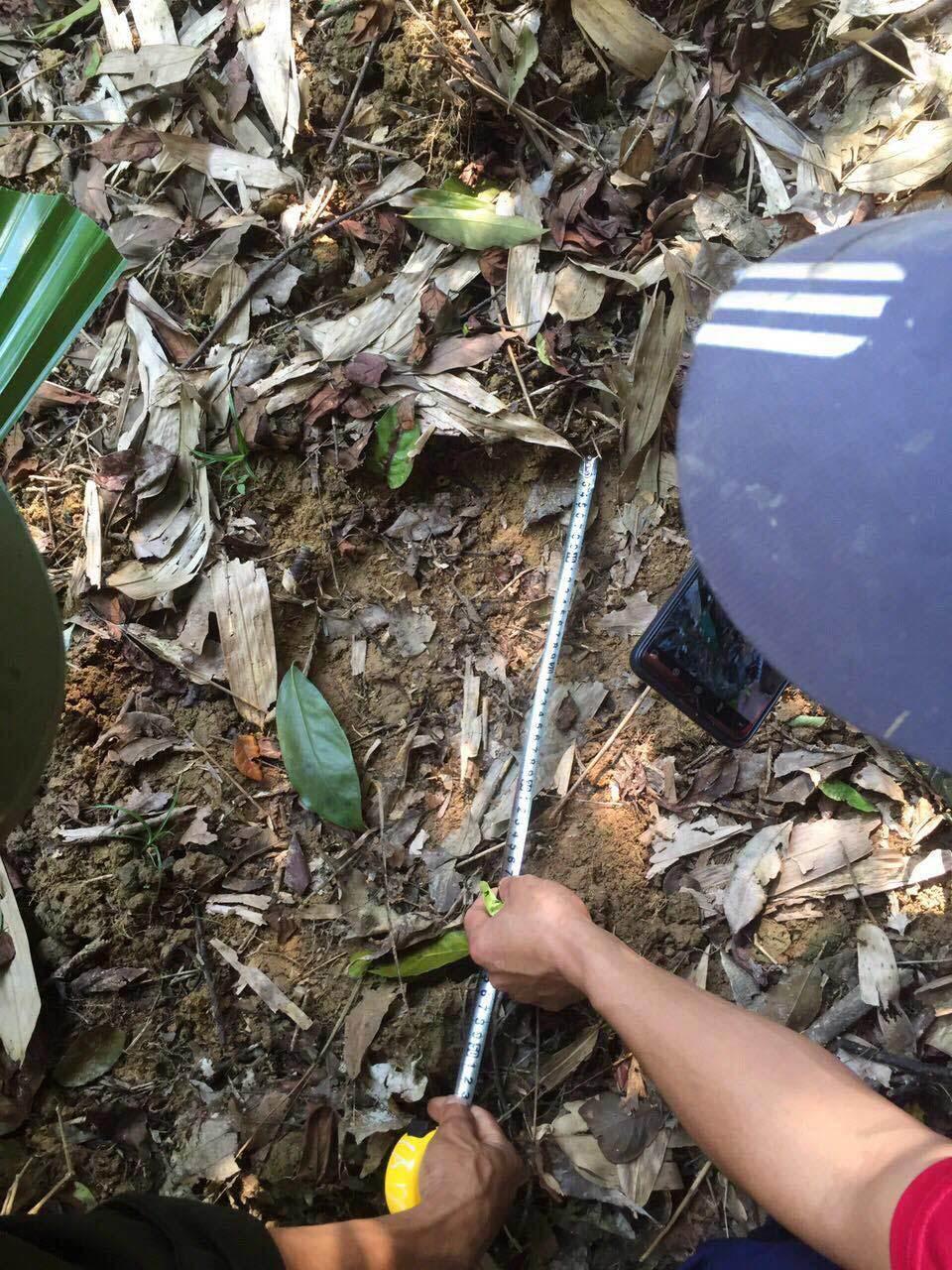 Hà Tĩnh: Người đàn ông chết trong rừng, nghi bị voi quật
