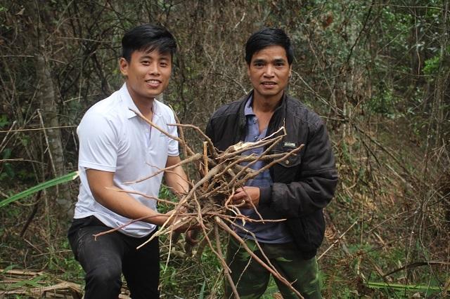 Xuyên rừng đào củ sâm khoẻ, uống ai cũng mê