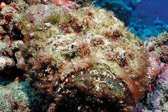 Cá mặt quỷ độc nhất thế giới bỗng xuất hiện ở bãi tắm đông người
