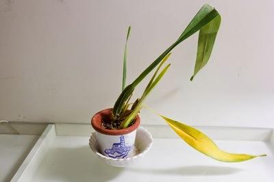 Những loại cây tiêu hao tài lộc người giàu không bao giờ trồng trong nhà