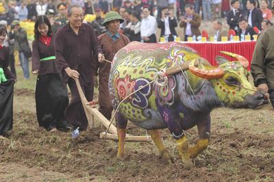 Phó Thủ tướng Trương Hòa Bình xuống đồng cày ruộng ở lễ Tịch điền