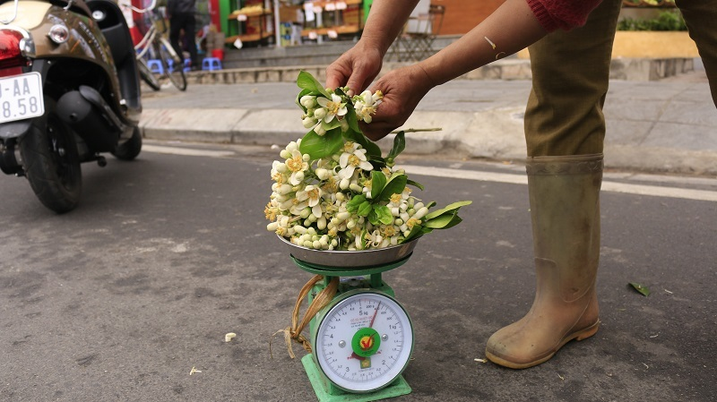 Đào phai, mai tàn, dân Hà thành chơi hoa bày đĩa nửa triệu/kg