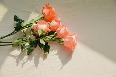 Lời chúc Valentine bằng tiếng Anh ngọt ngào và đầy ý nghĩa