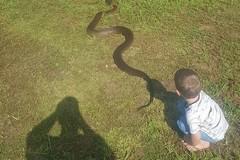 Sự thật về bức ảnh ông bố chụp con trai và trăn khổng lồ dài 8m