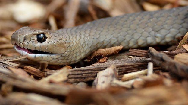 Quà Valentine 'bá đạo': Lấy tên người yêu cũ đặt cho gián, rắn độc