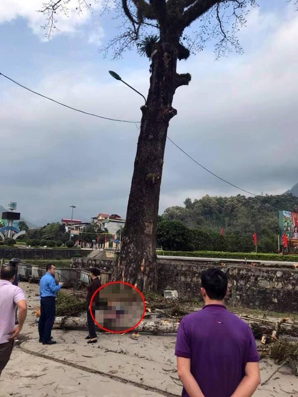 CLIP: Đi bộ trên đường, nam thanh niên bị cành cây rơi trúng, tử vong
