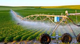 Đưa nông nghiệp sản xuất theo hướng công nghiệp