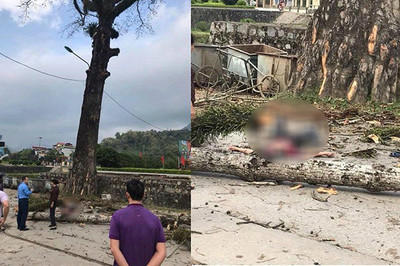 Tin mới vụ nam thanh niên đi bộ bị cành cây rơi trúng đầu, tử vong