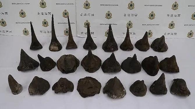 Lộ vụ 24 mảnh sừng tê giác giá 1 triệu USD về Việt Nam