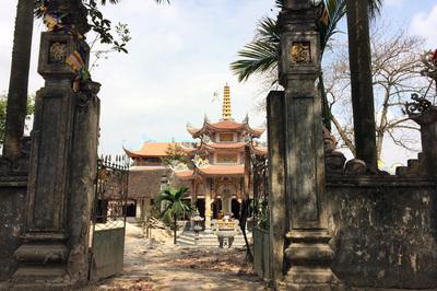 Sau khi chặt hạ, cây sưa 'trăm tỷ' ở Hà Nội được bán giá bao nhiêu?